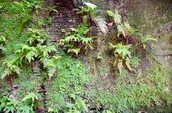Pared vieja con el helecho y las plantas tropicales Imagen de archivo
