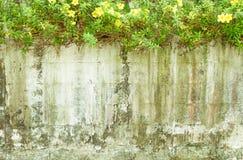 Pared vieja con la flor Foto de archivo libre de regalías
