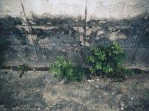 Pared vieja con los árboles Fotos de archivo