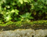 Pared vieja y planta minúscula Imagenes de archivo