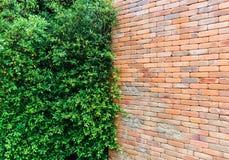 Pared y pared de ladrillo del árbol Imagen de archivo libre de regalías