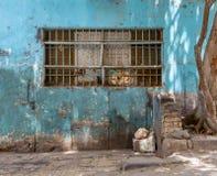 Parede abandonada de turquesa do grunge com a janela fechado coberta com as barras de ferro protetoras oxidadas imagem de stock royalty free