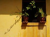 Parede amarela 2 Fotografia de Stock