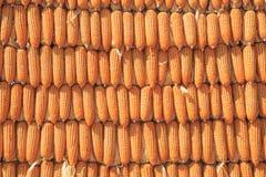 Parede amarela feita do milho Fotografia de Stock