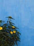 Parede azul foto de stock royalty free