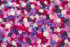 Parede bonita feita de flores roxas violetas vermelhas, rosas, tulipas, imprensa-parede, fundo foto de stock royalty free