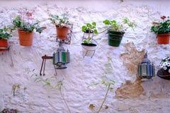 Parede branca com flor e plantas no potenciômetro Fotografia de Stock