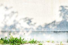 Parede cinzenta com plantas Foto de Stock Royalty Free