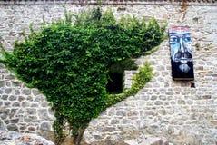 Parede com crescimento da planta verde e de pintura desconhecida fotos de stock