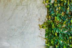 Parede com folhas Imagens de Stock