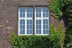 Parede com a parede da janela coberta pela hera fotografia de stock royalty free
