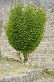 Parede com a planta crescente nela imagens de stock royalty free