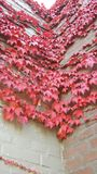Parede cor-de-rosa bonita Fotografia de Stock Royalty Free