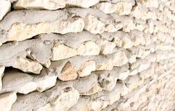 Parede coral Fotos de Stock