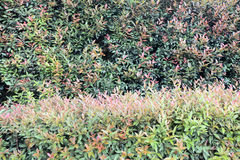 Parede da árvore Fotografia de Stock Royalty Free