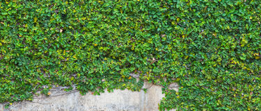 Parede da árvore Foto de Stock