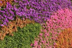 Parede da flor Fotografia de Stock Royalty Free