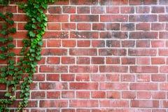 Parede da folha com fundo velho do tijolo Fotografia de Stock