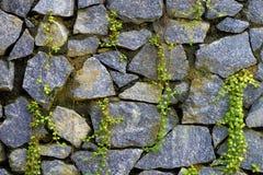 Parede da pedra natural e da grama sprouted Fotografia de Stock