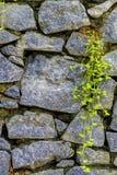 Parede da pedra natural e da grama sprouted Imagem de Stock Royalty Free