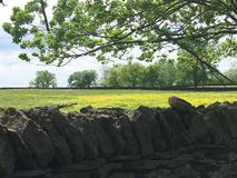 A parede da rocha caracteriza Wildflowers amarelos Fotografia de Stock