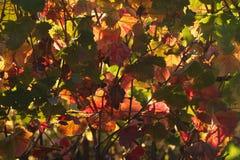 Parede das folhas Imagens de Stock Royalty Free