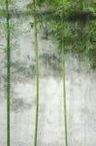Parede de bambu Fotografia de Stock Royalty Free