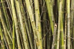 Parede de bambu Foto de Stock
