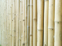 Parede de bambu amarela macia na opinião de perspectiva fotografia de stock