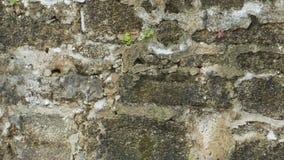 Parede de Coquina construída em 1808 Fotografia de Stock