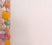 Parede de creme do tom decorada com conchas do mar Imagens de Stock Royalty Free