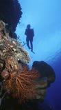 Parede de Fiji foto de stock