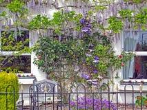 Parede de florescência decorativa da videira foto de stock royalty free