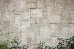 Parede de mármore cinzenta com arbusto Imagem de Stock