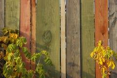 Parede de madeira colorido Texturas de madeira do fundo fotos de stock