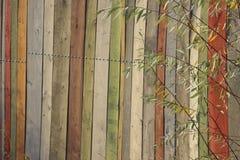 Parede de madeira colorido Texturas de madeira do fundo foto de stock