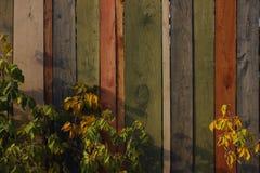 Parede de madeira colorido Texturas de madeira do fundo imagem de stock royalty free