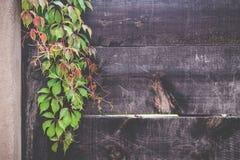 A parede de madeira com verde deixa o fundo no jardim Imagem de Stock Royalty Free