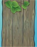 Parede de madeira e folhas verdes da mola do vidoeiro. Fotos de Stock