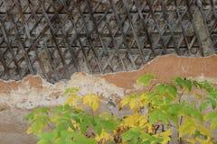Parede de madeira emplastrada velha com plantas foto de stock royalty free