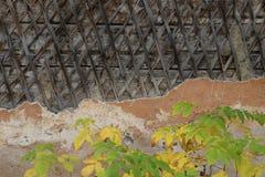 Parede de madeira emplastrada velha com plantas imagem de stock