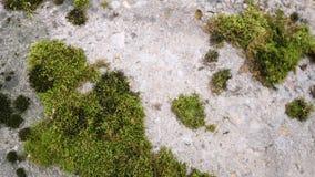 Parede de pedra cinzenta velha com fundo verde da textura do musgo Fotos de Stock Royalty Free