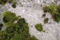Parede de pedra cinzenta velha com fundo verde da textura do musgo Imagem de Stock Royalty Free