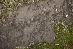 Parede de pedra cinzenta velha com musgo verde fotos de stock royalty free