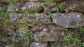 parede de pedra coberta com o musgo filme
