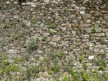 Parede de pedra com grama, Espanha Fotografia de Stock