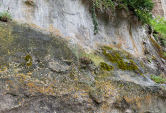 Parede de pedra com musgo Fotos de Stock Royalty Free