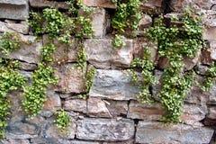 Parede de pedra com plantas imagem de stock