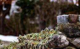 Parede de pedra com uma planta verde imagens de stock