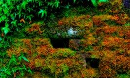 Parede de pedra com vegetação Imagens de Stock